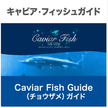 Sturgeon Caviar Fish Guide