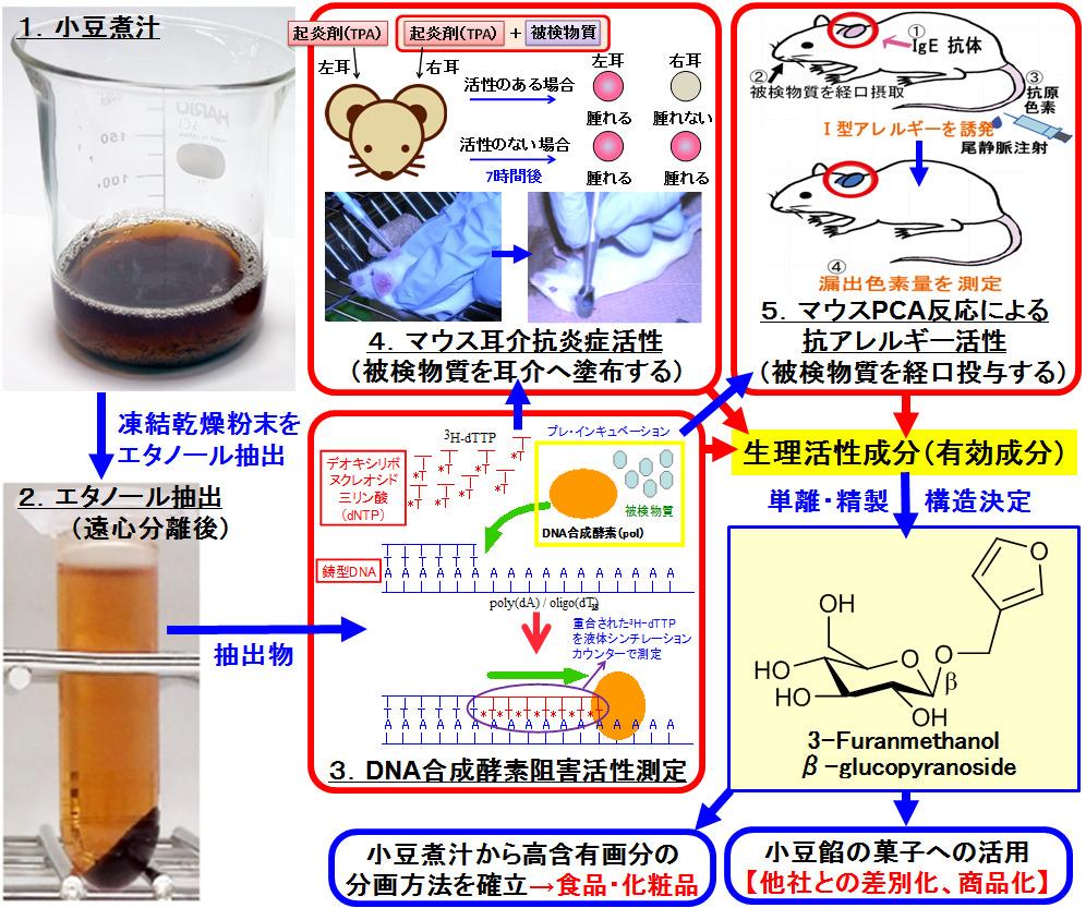 DNA合成酵素阻害剤、抗炎症剤、...